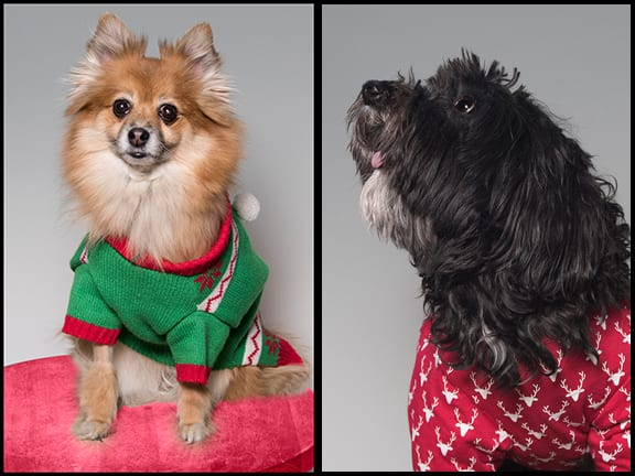Holiday Portraits For Pets Portland OR
