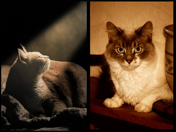 Cat Portraits Taken in Your Home